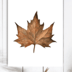 Maple Leaf Watercolor Free Fall Printable