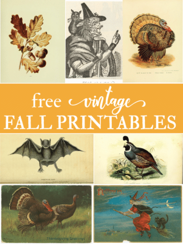 Free autumn fall images